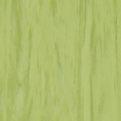 Линолеум Tarkett Standard Plus - Lime 0922 (рулон)